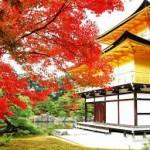 京都物件の運用開始